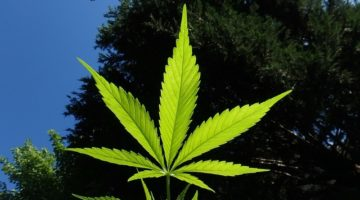 Difference Between Smoking Medical Marijuana and Edibles? What's Better?