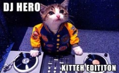 DJ Hero kitten